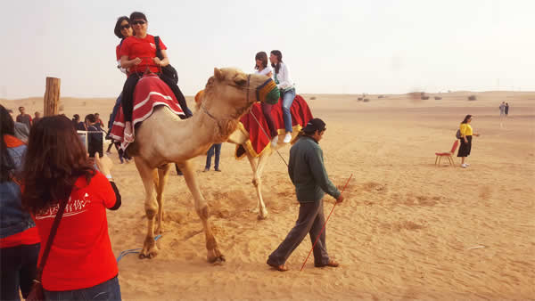 Morning Safari camel deals